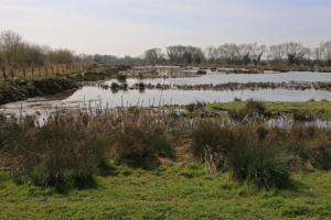 Bicester Wetland Reserve © Mike Pollard